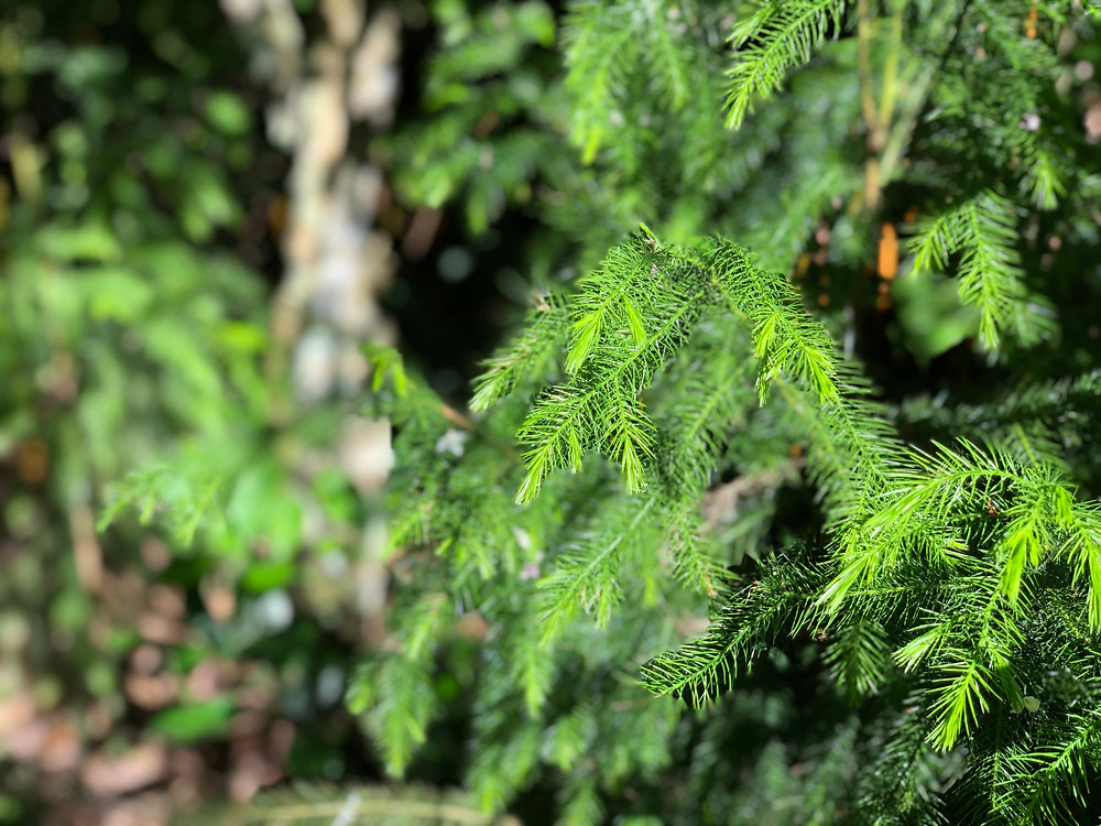 Not just trees: One of the ferns thriving at The Habitat