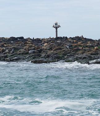 Phillip Island Seal Watching Ecoboat Tou