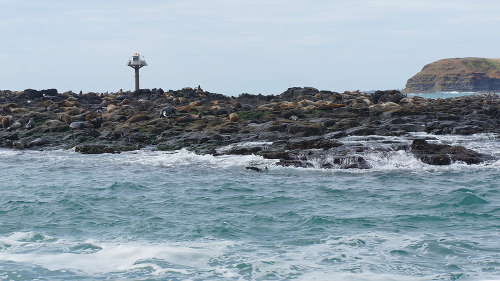 Seals relaxing about on the rocks