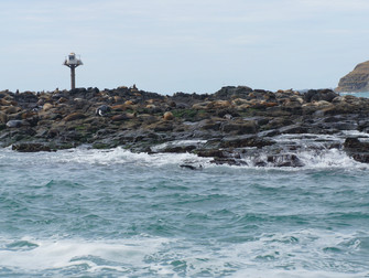 Phillip Island Seal-watching Ecoboat Tour