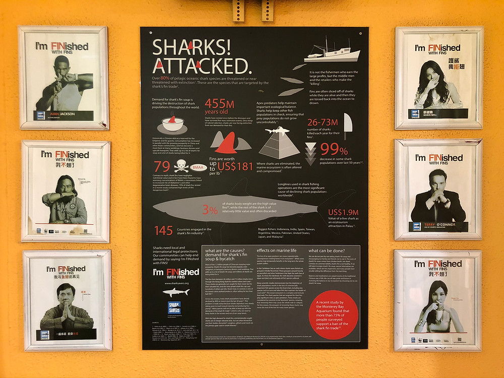 Simply say NO to shark's fins