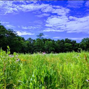 Landscape 405