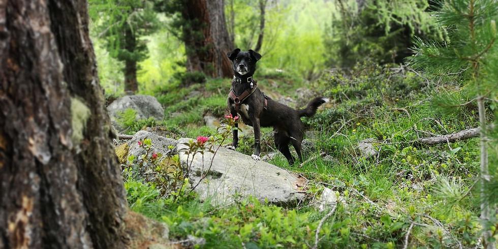 Gemeinsame Wanderung mit Übernachtung und Hunden