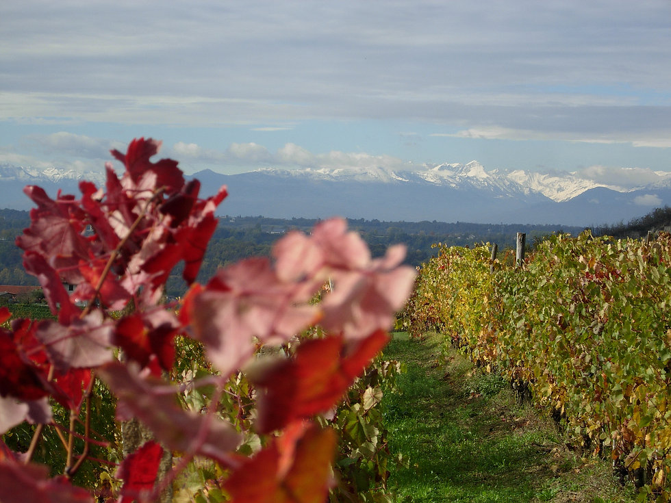 Barolo view from Monforte to the Alps