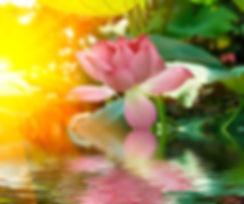 Water Glowing Lotus.jpg