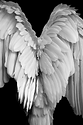 Black and White Wings.png