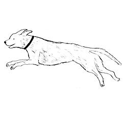 dog jumping.tif