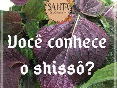 Você conhece o Shissô?