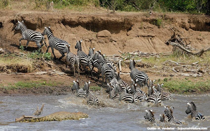 Zebras Kenya_edited.jpg