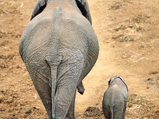 Elephants mum &  baby.jpg
