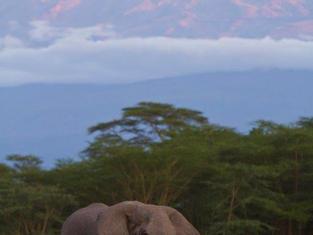 Safari in Amboseli.jpg