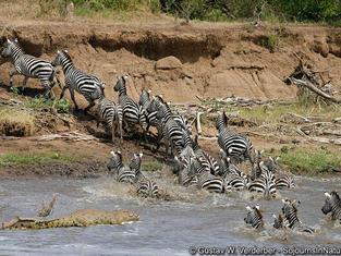 Zebras Kenya.jpg