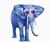 summer elephant_edited.jpg