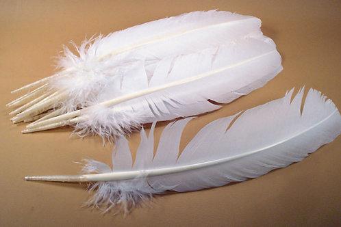 feather - turkey
