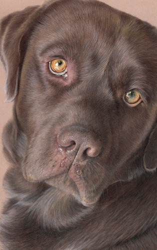 Pet Portrait Art