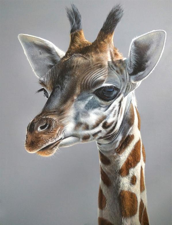 GalleryGiraffe.jpg