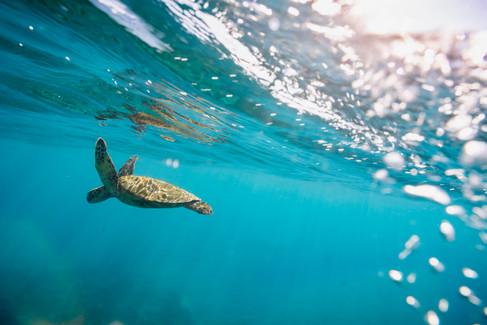 underwater-photography_sea-turtle_ocean_hawaii_1.jpg