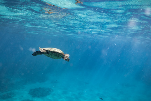 underwater-photography_sea-turtle_ocean_hawaii_7.jpg