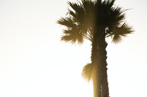 Palm Tree in San Diego, California