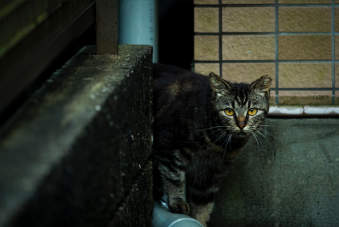Homeless Cat in Kyoto
