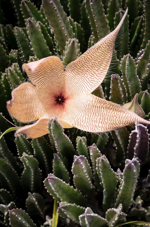 Florals of Ka'Ena Point, Hawaii