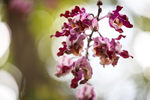 Botanical Gardens in Wahaiwa, Hawaii