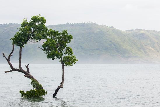 Tree in Kuta, Lombok