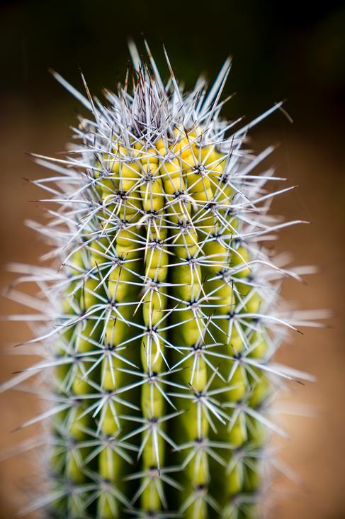 Tucson Cactus 3