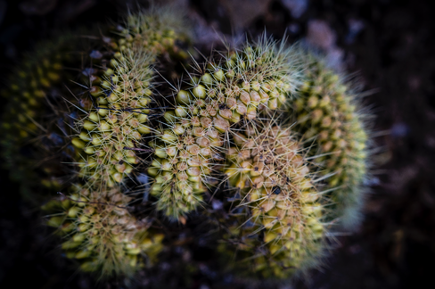 Tucson Cactus 2