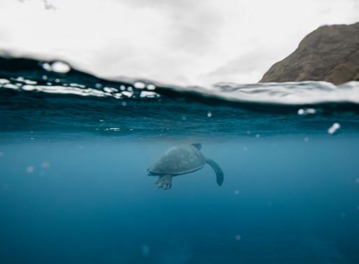 Oahu Ocean Images