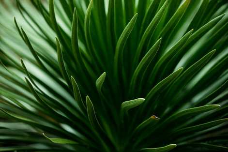 Green Maui