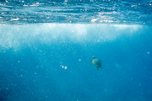 underwater-photography_sea-turtle_ocean_hawaii_6.jpg