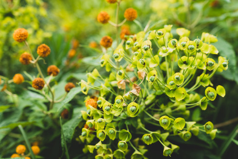Plants of Oregon