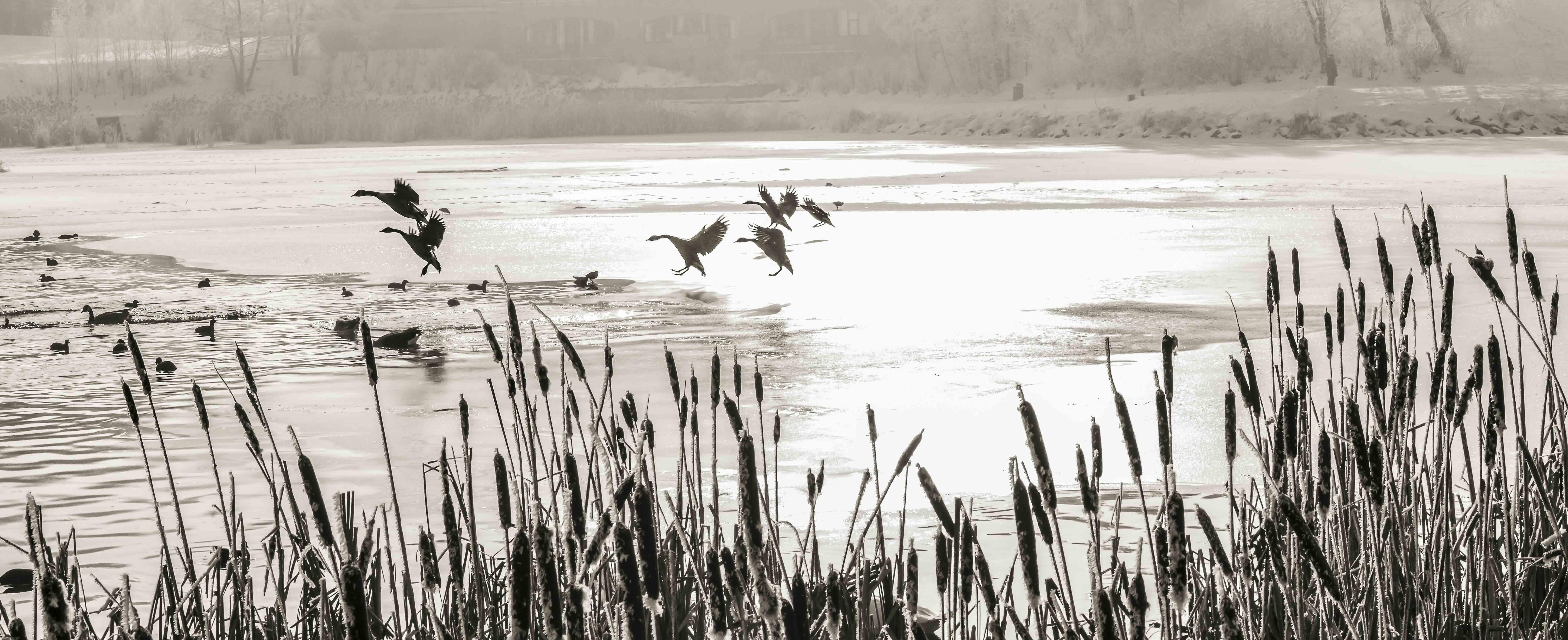 """Lac Louvain-la-Neuve """"1"""" - Belgique"""
