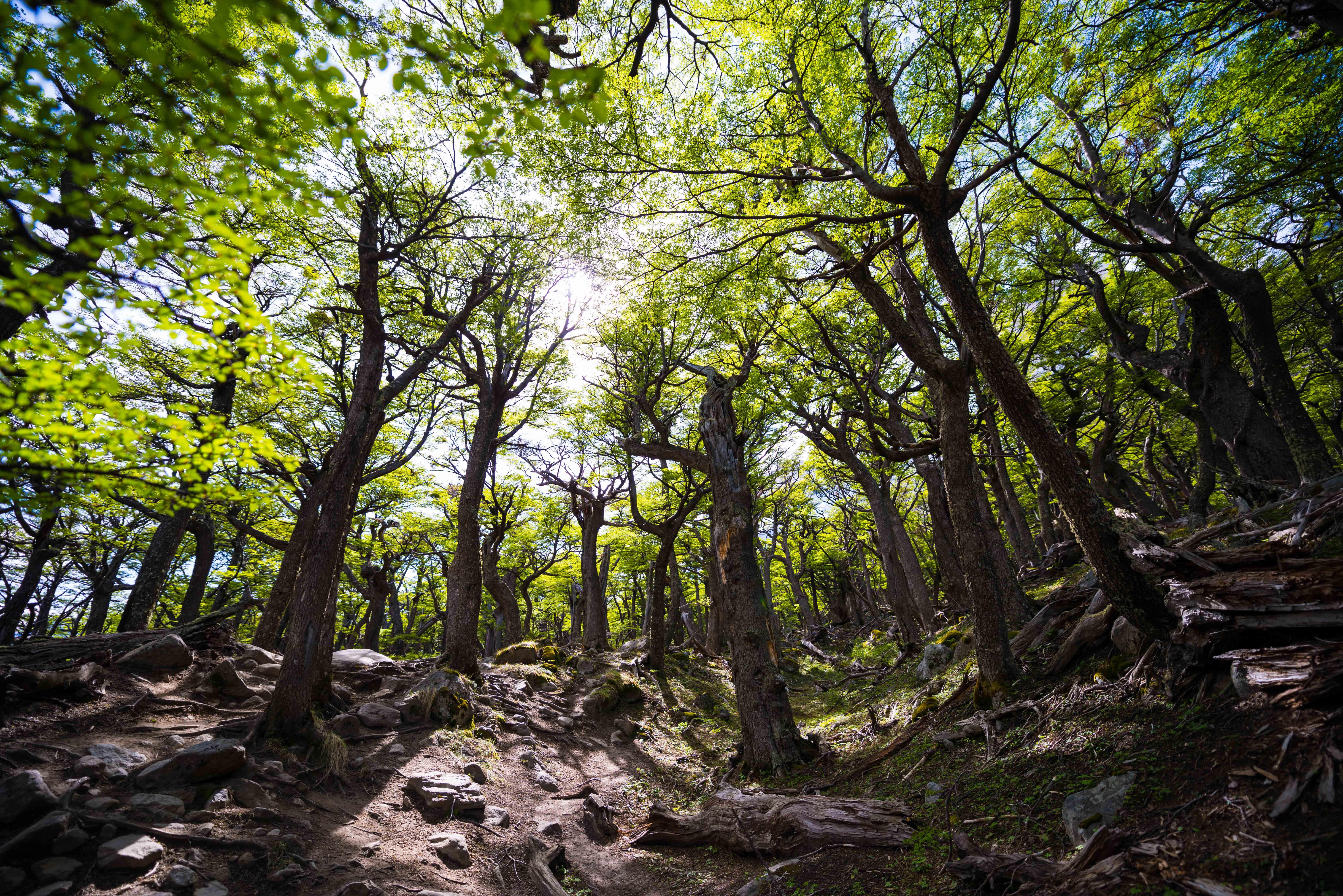 Végétation Torres Del Paine