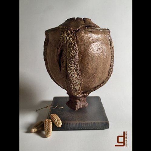 ludwigia :: rattlebox seedpod