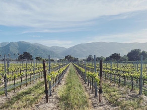 Santa Barbara Wine Country Guide