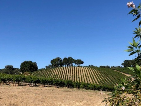 Perfect Paso Robles Weekend!