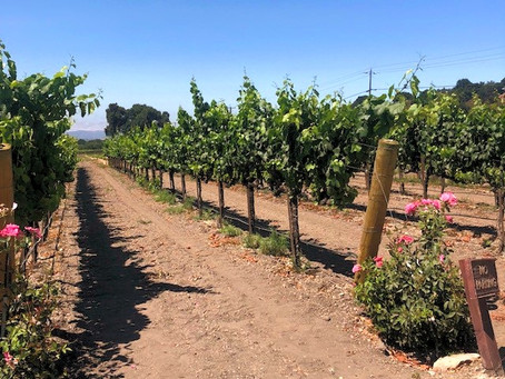 Santa Barbara Wine Country Weekend Guide