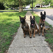 The Beasts!!!! From left to right (CRASH