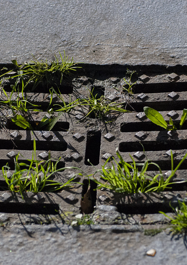 details from the serraglio area/ Prato