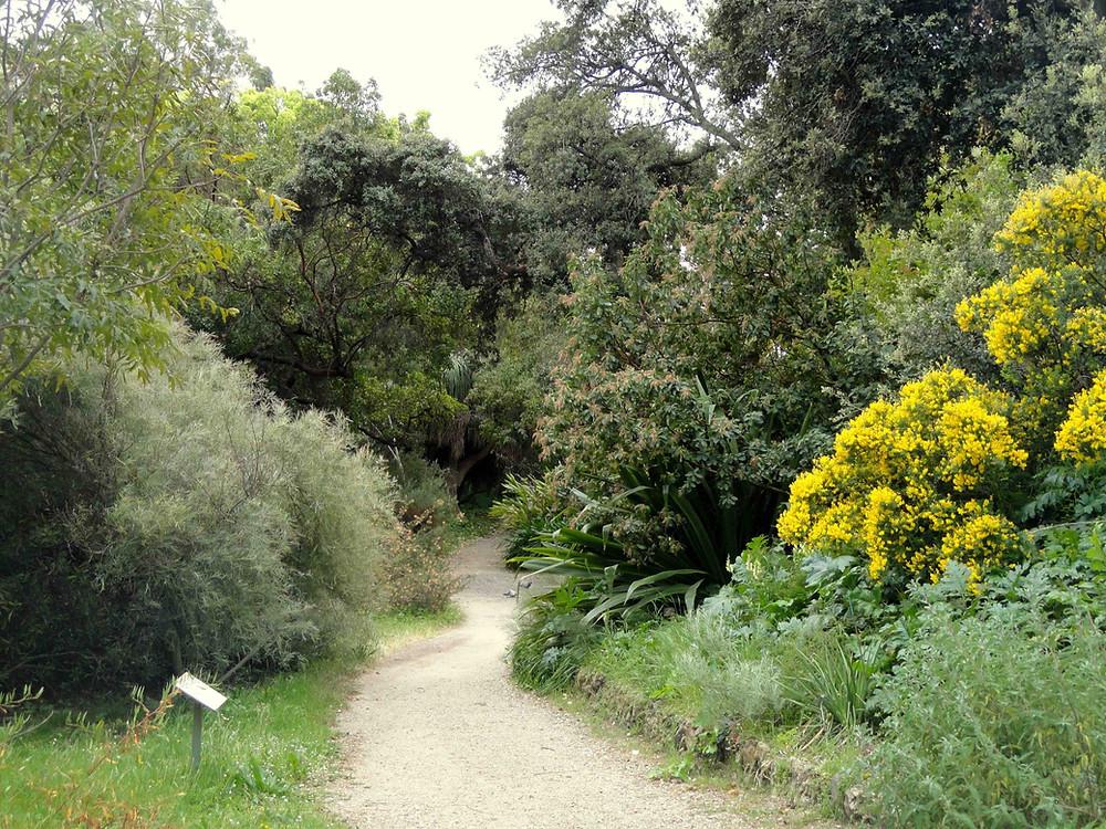 Jardin Thuret Antibes