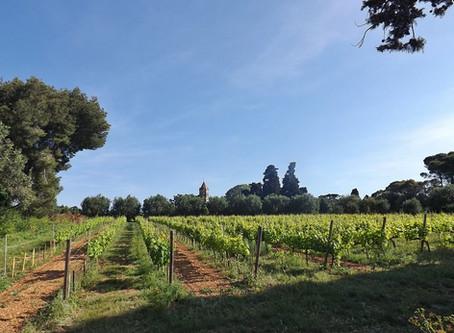 Enjoy the Wine of Provence!