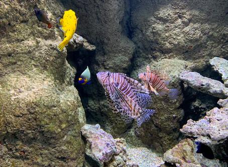 A ne pas manquer : Aquarium de Biarritz-Musée de la Mer