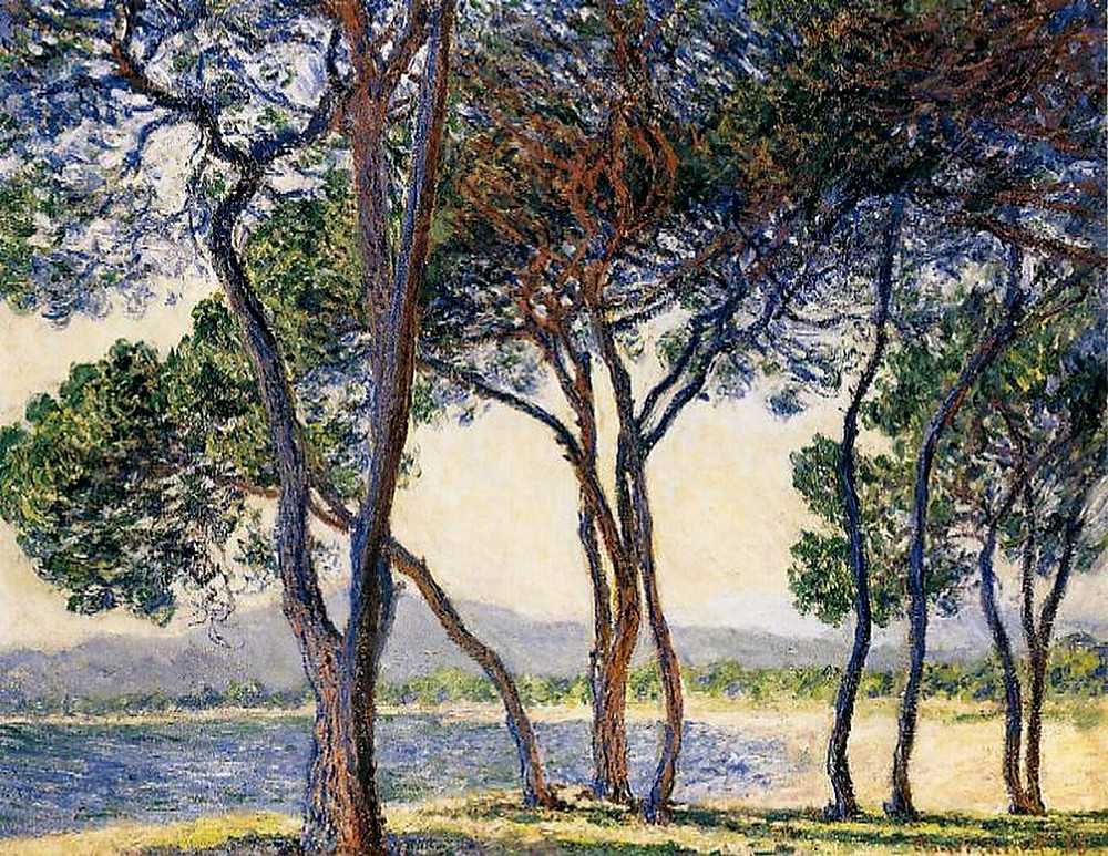 Trees by the seashore at Antibes