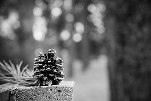 landscape photography_minnesota photogra