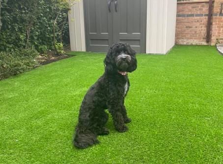 Animal Friendly Grass