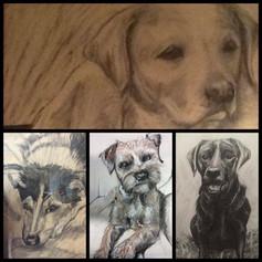 Dog Portraits
