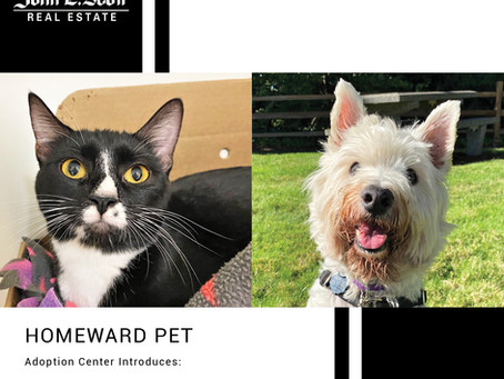 Furry Friends Friday Pet of the Week! October 1, 2021