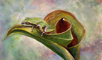 Frog on a lily (watercolor)